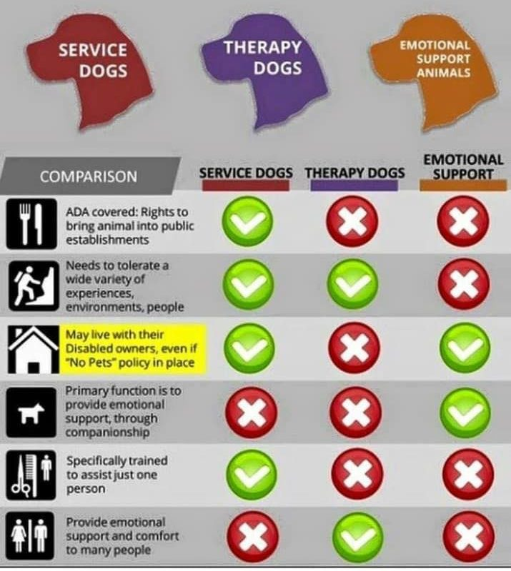 Emotional Support Animal, Therapy Dog, or Service Animal? Is there a difference?