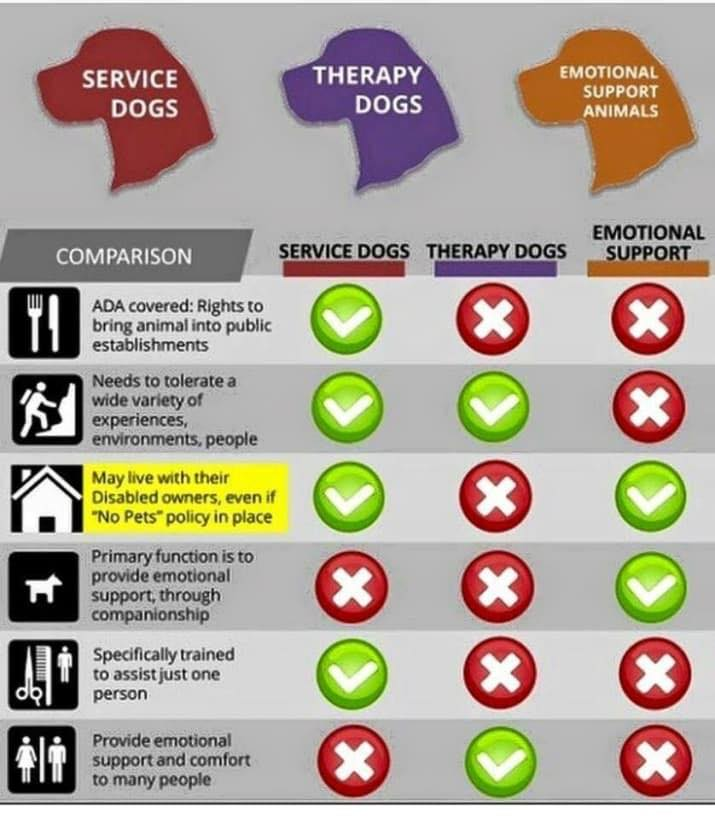 Emotional Support Animal Therapy Dog Or Service Animal Is There A Difference Wonderpup Dog Training