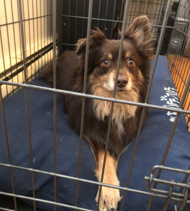 Preventing Anxiety In Dogs Post Pandemic